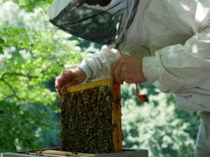Actualités du rucher